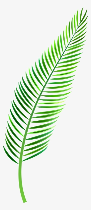 Tropical Leaf Png Free Hd Tropical Leaf Transparent Image Pngkit ✓ free for commercial use ✓ high quality images. tropical leaf png free hd tropical