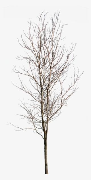 Tree PNG, Free HD Tree Transparent Image - PNGkit