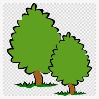 Tree Png Free Hd Tree Transparent Image Pngkit