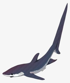 dde3f91c8cdd5 Shark Silhouette PNG, Free HD Shark Silhouette Transparent Image ...