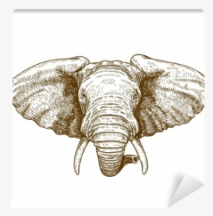 Elephant Head Png Free Hd Elephant Head Transparent Image Pngkit Polish your personal project or design with these elephant head transparent png images, make it even more personalized and more attractive. elephant head png free hd elephant