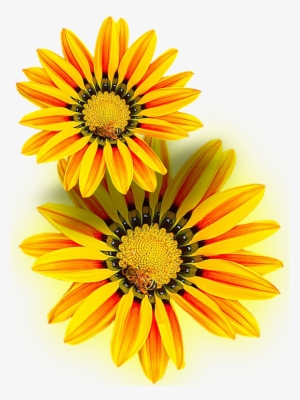 yellow flower png free hd yellow flower transparent image pngkit yellow flower png free hd yellow