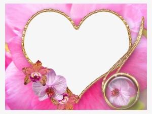 Wedding Frame Png Free Hd Wedding Frame Transparent Image Pngkit