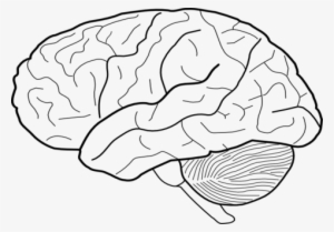 picture relating to Brain Template Printable known as Human PNG, Totally free High definition Human Clear Impression , Site 6 - PNGkit