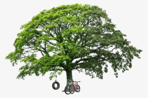 Tree PNG, Free HD Tree Transparent Image , Page 4 - PNGkit