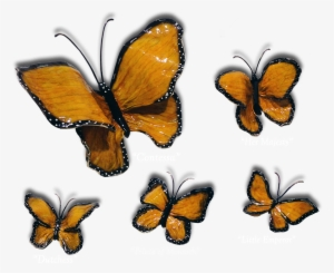 Butterfly PNG, Free HD Butterfly Transparent Image - PNGkit