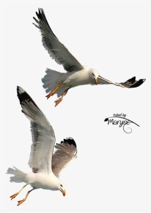 Flying Birds PNG, Free HD Flying Birds Transparent Image , Page 2