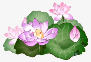 Lotus Flower Png Free Hd Lotus Flower Transparent Image Pngkit