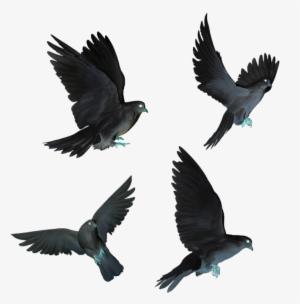 Bird PNG, Free HD Bird Transparent Image , Page 5 - PNGkit