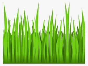 Grass Background PNG, Free HD Grass Background Transparent Image