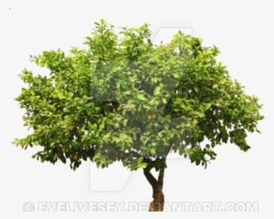 Tree Cutting Png Free Hd Tree Cutting Transparent Image Pngkit