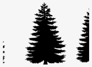 Tree Png Free Hd Tree Transparent Image Page 15 Pngkit