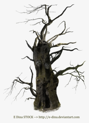 Old Tree PNG, Free HD Old Tree Transparent Image - PNGkit