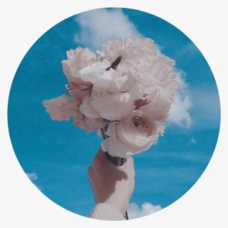 1a68951a963 Whiterose Bluesky Aesthetic Background Tumblr Roundobje - Peony